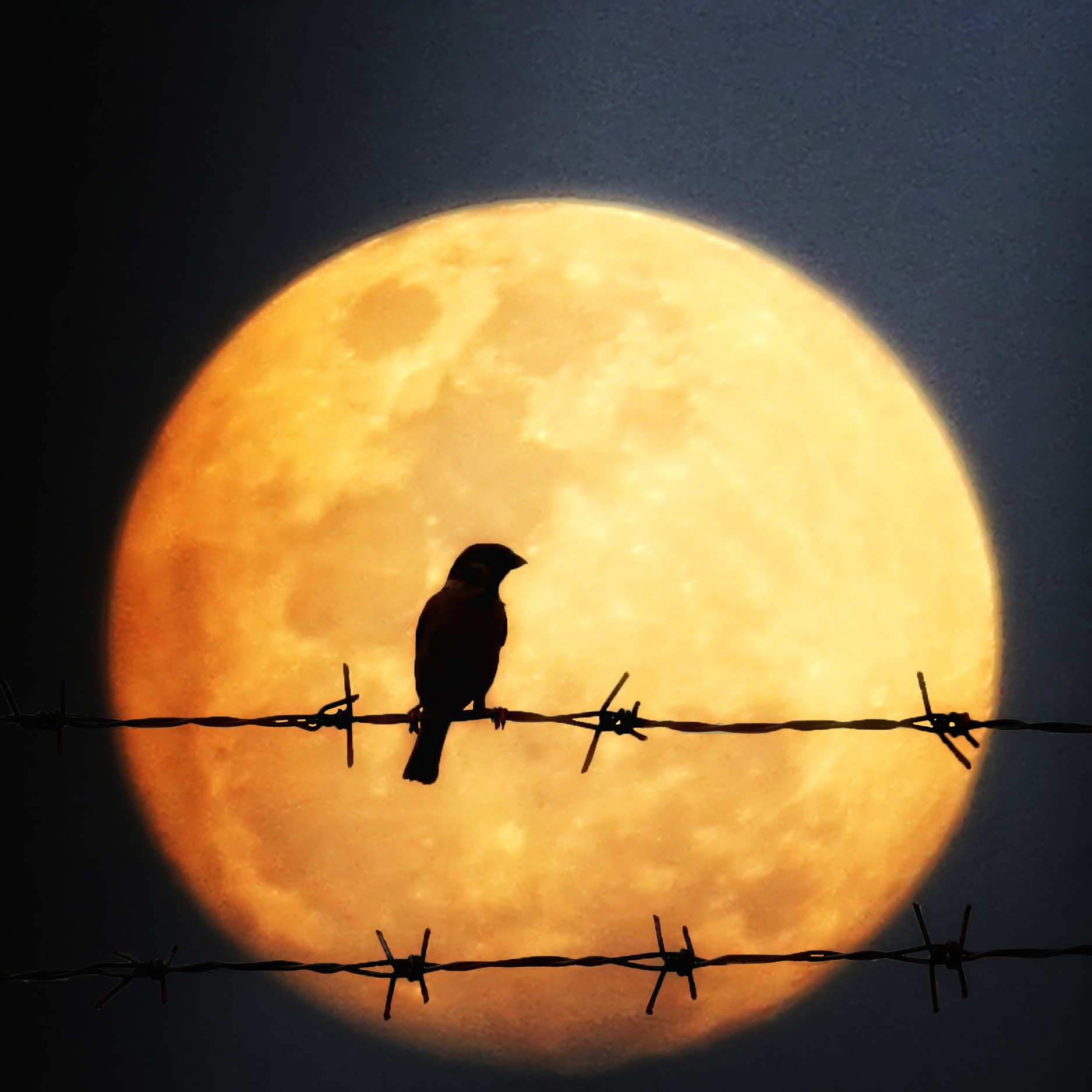 Bird and Full Moon